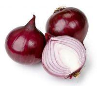 allium cepa - Vegetable seeds Allium cepa onion seeds red onion about particles