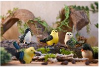 Wholesale Dollhouse Miniature Toys Bird Fairy Land Fairy Garden Birds birds