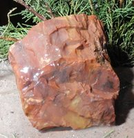arizona petrified wood - 430 g Arizona Rainbow Petrified Wood For Your Rock or Fossil Collection or Classroom quartz crystal raw stone YL J0652