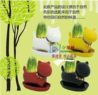 Wholesale REAL Grass New Arrival real planting grass little vase Good for gift decoration color dog