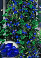 Wholesale 100pcs Strawberry Seed very delicious Fruit Seeds For Home Garden bonsai seeds white yellow blue black red green great strawberries