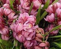 500pcs в комплект редкий цветок орхидеи семенной розовый темно-розовый домашний сад DIY хороший подарок для вашего друга Пожалуйста, лелеять