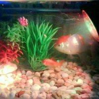 Wholesale Garden Pond Pool Tank Accessories Underwater LEDs W V Waterproof IP68 Submersible Light Spot Light RGB for Aquarium