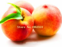 apricot fruit trees - 5 bag Apricot tree Seeds High survival Rate bonsai Fruit Seeds For Home Garden