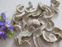 antique oyster - AAAA Natural Oysters Fossils Mineral Stone Ore Gems Stone Rough Ore Energy Madagascar