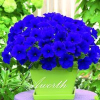 baskets and containers - Petunia Flower Blue Purple Seeds Bag Ideal Garden Flower for Flower Beds Baskets and Containers Bonsai