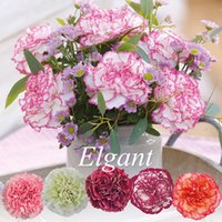 Wholesale Mixed Color Carnation Flower Seeds