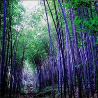 bamboo plant seeds - Rare purple Timor Bamboo Seeds Bambusa black bamboo seeds planted courtyard Yi package