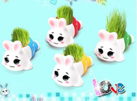 Wholesale REAL Grass New Arrival real planting grass little vase Good for gift decoration rabbit