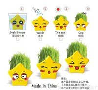 Wholesale REAL Grass New Arrival real planting grass little vase Good for gift decoration lucky stars