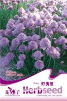 allium garden - Flower Chives Seeds Original Package Garden bonsai Flower seeds Easy Grow Allium schoenprasum bags per