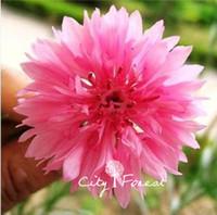 bachelor buttons - Pink Cornflower Flower Seeds or Bachelor Button Flower Centaurea Cyanus Super Easy to Grow