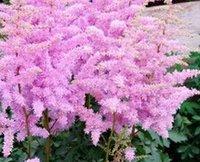 500pcs набор Chinensis стланика Цветы семена розовый цвет дома сад DIY ХОРОШИЙ ПОДАРОК ДЛЯ ВАШЕГО ДРУГА Пожалуйста лелеять