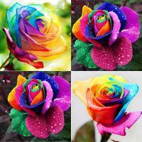 Семена цветущие Цены-2016 г. Многолетние Красивые Цветущие Розы Семена цветов радуги Розы Семена цветов Семена Герметичный Суккуленты холодной HY1175
