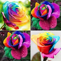 beautiful cold - 2016 Perennials Beautiful Flowering Roses Seeds Rainbow Colors Rose Seeds Flower Seeds Potted Succulents Cold HY1175