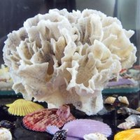 ash shell - Coral coral aquarium peony special offer ash aquarium landscaping decoration Coral conch shells