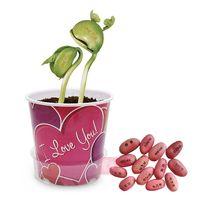 bean herb - 100pcs white magic bean seeds creative Magic Bean eggs Seeds Gift Plant Growing Message love WordGreen Home jackbean