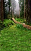Wholesale Green Forests Trees Scenic Outdoor Wedding Photography Studio Vinyl Cloth Background x7ft Printed Lighting Photo Shop Backdrops