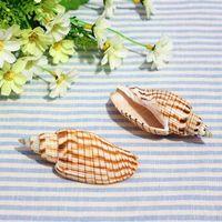 aquarium photography - Hot natural conch stripes around cm platform Home Furnishing screw aquarium decoration DIY wedding photography props