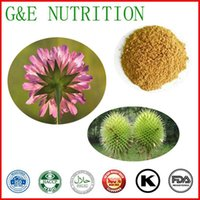 Wholesale Hot Sale100 natural Teasel Root Plant Extract with g