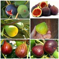 big pot plants - T6pcs big fruit Fig seeds DIY Garden fruit seeds potted plants garden supplies bonsai home L031