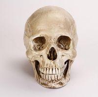 Wholesale high quality Human Skull Cranium Replica Resin Model Medical Teach Party Bar Prop Gold mannequin B183