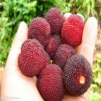 fruits and vegetables - Vegetables and fruit seeds Red bayberry seeds Bonsai plants Seeds for home garden seeds AA