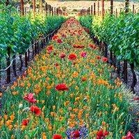 better gardens - Perennial Wild flower Seeds Mixed Very Beautiful Bring You A Better Enjoyment DIY Garden