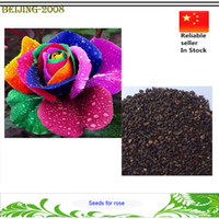 al por mayor rainbow rose seeds-Colorido del arco iris Rose Semillas jardín semillas de flor de la planta / Jardín semillas de la flor hermosa del envío libre
