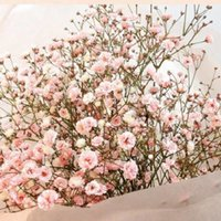 Wholesale 100 Gypsophila seeds Gypsophila paniculata L Flowers Seeds Easy Growing Beautiful Simple Flower