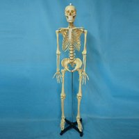 Wholesale high quality hot sale China factory medical teaching simulator cm human skeleton model equipment for demonstration