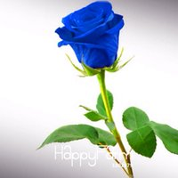 Wholesale New Seeds Blue Rose Fragrant Gardens Flowering Plants Strong Blue Dragon rose Blue Rose Seeds Bag UTXC7