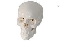 anatomical parts - Mini Medical Anatomical multicolor Human Skull Model High Quality Classic part Life Size