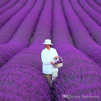 Wholesale 100 bag french provence lavender seeds very fragrant organic lavender seeds plant flower Flower seeds Home Garden Bonsai
