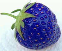 Cheap Hot sales Fruit seeds blue strawberry seeds DIY Garden supplies fruit seeds potted plants patio lawn