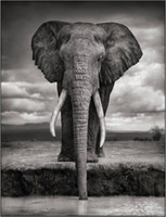 american wildlife art - 24X36 INCH ART SILK POSTER Nick brandt wildlife animal black and white portraits elephant drinking amboseli