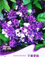 basil sweet - Sweet Scented Basil Seeds Ocimum Sanctum Ocimum Gratissimum Plants D039