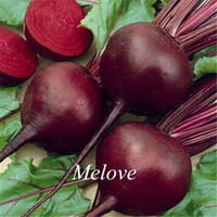 beets vegetables - Beetroot Vegetable Fresh Seeds Heirloom Vegetable Beet Seeds