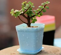 Wholesale Patio LawnGarden Supplies Planters Pots Plastic seedling thickening basin color many high quality support for