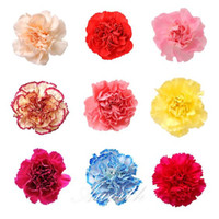 Wholesale Mixed Color Carnations Fresh Flower Seeds Dianthus Caryophyllus