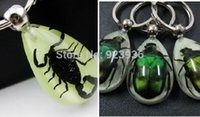 amber bug jewelry - ashion Jewelry Key Chains Real Insect Scorpion Beetle In Amber Resin Keychain Promotion Gift Novel Gift Bug KeyChains Glow In Dark