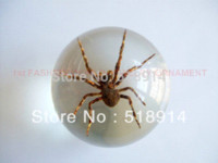 animal specimen - Real Spider in Clear Resin Ball Marble Insect Specimen Bug Sphere so Cool Boy Gift mm Diameter Birthday Present