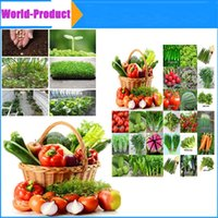 Wholesale Whoesale Vegetable seed family potted balcony garden four seasons planting with retail kinds of different seeds set grains