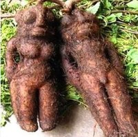 Wholesale Time limited Limited Sementes De Flores Dishes seeds Mexico Rare Wild Yam Seeds Single Fruit Bonsai Kidney Vegetable