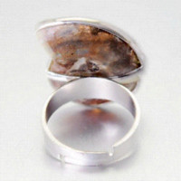 ammonite shell - Natural Ammonite Conch Shell Rings Unique Design Unisex Adjustable Ring Jewelry Cheap jewelry ring tray