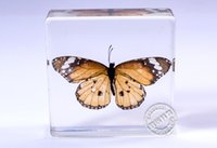 acrylic paperweight - Real Monarch butterflies in Acrylic Block Specimens In Clear Lucite Educational Instrument Specimen Set Lucite Treasures Octopus Paperweight