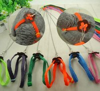 Wholesale Parrot fly line outdoor rope flying training rope straps bird rope training aids