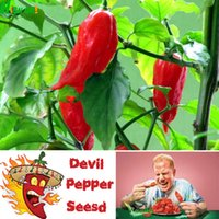 bag of peppers - 50 Bag Diy Potted Plants Indoor Outdoor Germination Rate Of India Devil Pepper Vegetable