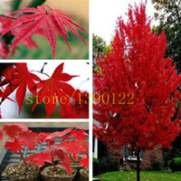 Wholesale 20 american red maple seeds tree seeds maple for home GARDEN planting easy grow very rare tree seeds