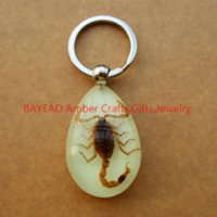 amber bugs - Real Brown Scorpion In Glow Amber Keychains Bug kering L Size Promotion Gift novel gift novel souvenir Party Gift TAXIDERMY GIFT